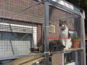 вольер для кошек по своим размерам