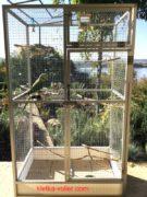 александрийский попугай в клетке