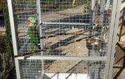 попугай в просторной клетке