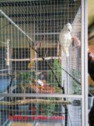 вольер-для-попугая-в-дом